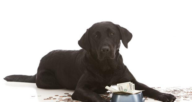 From day care to pet tech – the true cost of owning a dog
