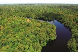 APP Natural Forest LR