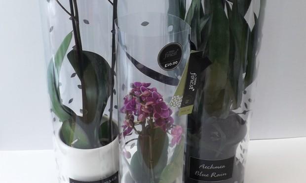 staeger revamps tesco finest houseplants packs. Black Bedroom Furniture Sets. Home Design Ideas