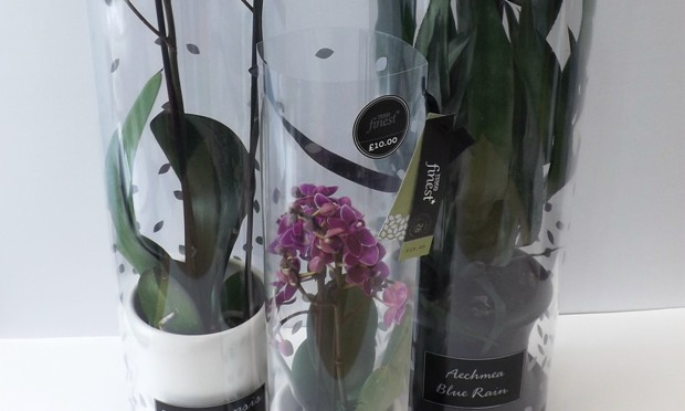 Staeger revamps tesco finest houseplants packs - Interior plant maintenance contract ...