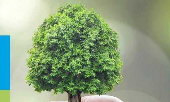 pregis biodegradable paper packaging  u2018saves 122 125 trees u2019